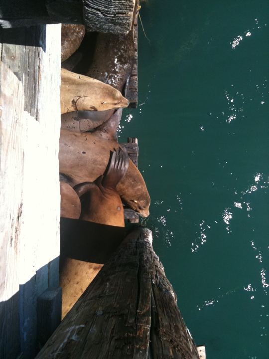 Sea lions at the pier at Avila Beach